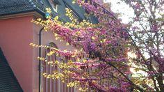 Frühling in aller Pracht