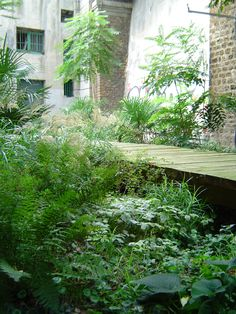 / / . Jungle in two weeks time, Palais de Toyko, Paris