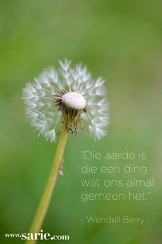 Sielkundige Louis Awerbuck gesels oor ontrouheid in verhoudings Afrikaans Quotes, My Roots, Friendship Quotes, Dandelion, Environment, Spirituality, Plants, Outdoor, Earth Quotes