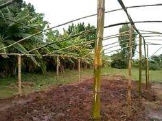 Estufa construida com Bambu, Greenhouse built with Bamboo Bottle Irrigated with Pete: Good garden - YouTube