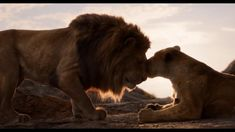 Screencap Gallery for The Lion King Bluray, Disney, Disney Live-Action). After the murder of his father, a young lion prince flees his kingdom only to learn the true meaning of responsibility and bravery. Watch The Lion King, Lion King 2, Lion King Movie, King Simba, Disney Lion King, Disney Marvel, Disney Pixar, Live Action, Le Roi Lion Film