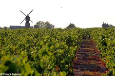 Vignes en Val de Loire