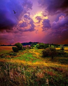 """""""Secluded Dreams"""" by Phil Koch"""