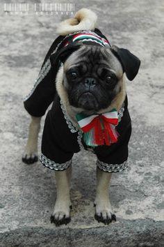 Mexican Pug by Annah Aguinaga Gismonda999.deviantart.com