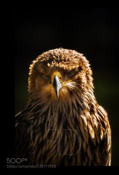 Eagle #PatrickBorgenMD