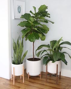 XXL Mid Century Modern Planter, Ceramic with Shorty Wood Stand (15