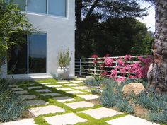 The backyard of this contemporary home has large concrete pavers with Scotch Moss planted between. Bougainvillea provides contrasting color to the succulents.  http://om-paramapoonya.hubpages.com/hub/ground-covers