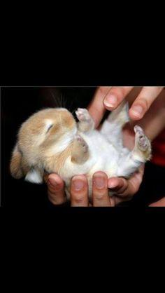 Sød kanin