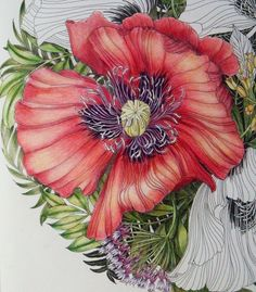 Colorful Drawings, Art Drawings, Rose Drawings, Drawing Art, Colouring Pages, Coloring Books, Watercolor Flowers, Watercolor Paintings, Colouring Techniques