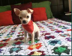 Phoenix y el crochet!!!
