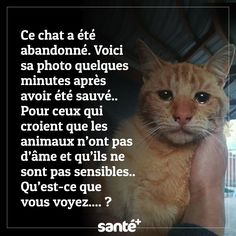 No to the abandonment of animals - Rosa Van Everdingen - - Non à l'abandon d'animaux No% & # animals Fun Facts For Kids, Kids Fun, Animal Facts, Funny Animal, Disney Facts, Travel Quotes, Animal Photography, Abandoned, Cute Animals