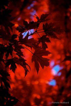 Autumn Blaze von Pamela Hubbard