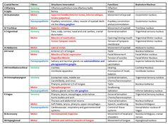 Cranial Nerves   almostadoctor.com - free medical student revision notes