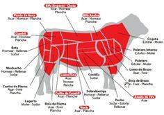 Usos y Cortes de carne de res