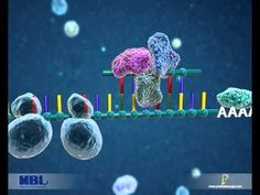 MBL International Corporation- RIP-Chip Assay for microRNA by ProteinLounge