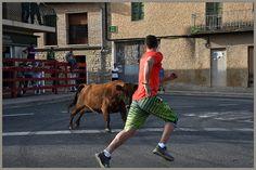 Santacara: Vacas de Pedro Domínguez - Fiestas de la Juventud ... Youth, Cows, Fiestas
