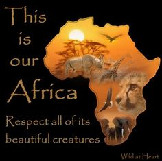 Protect all of Africa's beautiful creatures African Animals, African Safari, African History, African Art, Ghana, Out Of Africa, South Africa Map, West Africa, Images Gif