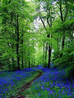 Iris lined path