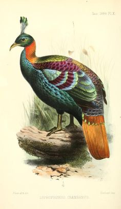 ser. 5, v. 2 (1884) - Ibis. - Biodiversity Heritage Library