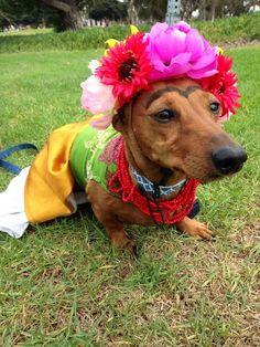 Frida Kahlo. | 27 Disfraces de Halloween extremadamente ingeniosos para tu perro