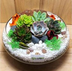 Lovely Ginevra Succulents Arrangement Mid Range Terrarium, a mini garden in a glass. Add some green to your home and office. Visit Lush Glass Door, Singapore's Terrarium One Stop Online Shop, for more choices. Succulents In Glass, Glass Cactus, Cactus Flower, Cacti And Succulents, Planting Succulents, Cactus Terrarium, Garden Terrarium, Plant Breeding, Pot Plante