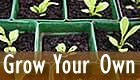 Grow Your Own - seedlings and text