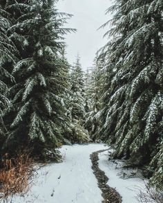 Nature Winter Photography Wilderness 37 Ideas For 2019 Winter Szenen, Winter Love, Winter Christmas, Winter Walk, Winter Magic, Christmas Images, Winter White, Winter Photography, Nature Photography