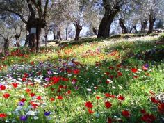Spring in Greece French Nursery, Paradise On Earth, Wild Nature, Travelogue, Nursery Rhymes, Wonderful Places, Poppies, Greece, Lily