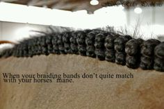 My horse is sorrel and I have black bands :P