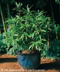 Plus de 1000 id es propos de home jardin sur pinterest - Arbuste pour terrasse plein soleil ...