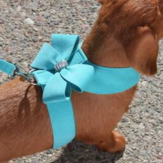 In Tiffany Blue, beautiful harness with sparkle tie down - Nouveau Bow Crystal Dog Harness- 20 Colors $63.00