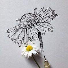 Related posts: 44 Ideas flowers drawing tattoo sketches inspiration for 2019 new Ideas flowers drawing design plants Super tattoo flower drawing sketches 38 ideas 62 Trendy Ideas For Drawing Sketches Disney Doodles Tattoos Sketches, Sketch Book, Pen Art, Art Drawings, Flower Drawing Tumblr, Flower Drawing, Art, Artsy, Cool Drawings