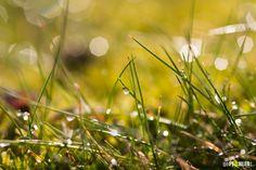 Tau auf Gras (Makro)