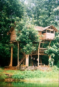 Jungle Tree House...someone must've snatched this out of my unknown dreams!