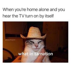 """The New Meme That Will Literally Leave You Asking the Question """"What in Tarnation?"""""""