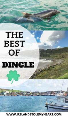Slea Head Drive, Star Wars, and a Dolphin: The Best Things to do in Dingle - Ireland Stole My Heart - Things to do in Dingle, Ireland **** Dingle Europe Destinations, Europe Travel Tips, Travel Guides, Travelling Europe, Traveling, Holiday Destinations, Budget Travel, Scotland Travel, Ireland Travel