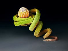 A butterfly egg on a tendril. WOW!