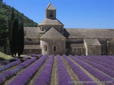 Europe Video Productions Travel Photo: Provence - Lavender fields – Provence Region of France – Tourism in Provence – France Luberon Provence, Provence France, Paris Travel, France Travel, Places Around The World, Around The Worlds, Photo Voyage, Stock Image, Voyage Europe