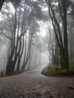 I love foggy trees...