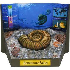 LOTS OF SCIENCE MODELS 3D Papercraft Free Download PDF Ammonite Fossil,Science,Paper Craft,cephalopod,ammonite,Extinct species,prehistoric life,Mesozoic era,Paleozoic era
