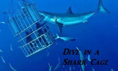 Shark Cage Diving :O