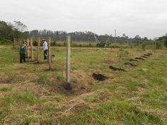 20100730 Fazenda Construção galinheiro 001.jpg