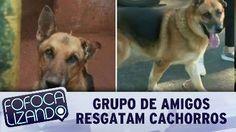 Grupo de amigos resgatam cachorros maltratados