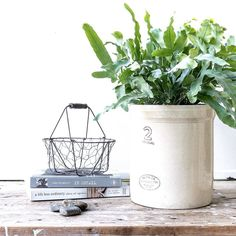 "I'm always drawn to unusual plants and this ""Blue Star"" fern (phlebodium aureum) was in my cart 3 seconds after I spied it! :) it looks especially pretty in #mymedalta pot! . I'm hoping that a day spent outside in my garden will help lift this funk I've found myself in  ... it can't hurt right!? .  I invite you to tag your images to #sunday_sundries @keepingwiththetimes to share your moments of beauty and gratitude... today I'm grateful that the sun is shining and for the gift of rain we've…"