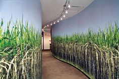 Employees at Bacardi's offices in Miami walk through a sugar cane field created by the Gensler architectural firm by printing a photographic. Hallway Designs, Large Format Printing, Corporate Interiors, Chula Vista, Sign Design, Open Plan, Wall Murals, Mission Vision, Architecture
