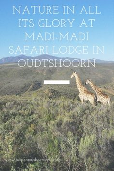 On a cloudy, rainy Friday morning that me and hubby set off to picturesque Madi-Madi Karoo Safari Lodge in Oudtshoorn, Western Cape. Sa Tourism, Table Mountain, Countries Of The World, Horseback Riding, Cruises, Road Trips, South America, Places To See, Safari