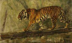 Herbert van der Poll (1877-1963)  A Tiger