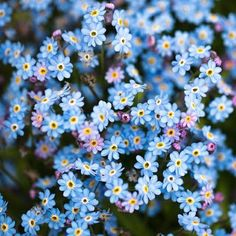 Flores do Campo Love it...