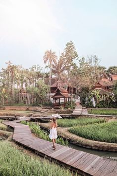 Rice terraces in Chiang Mai I Thailand: http://www.ohhcouture.com/2017/03/monday-update-47/ #leoniehanne #ohhcouture