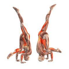 Crane pose with right leg up - Bakasana right - Yoga Poses | YOGA.com
